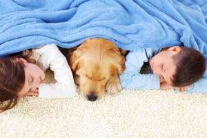 chem-dry-relax-with-pet-on-a-clean-carpet